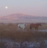 Triple Diamond Horses, 160 Ayers Rd, Wheatland, WY, 82201, USA