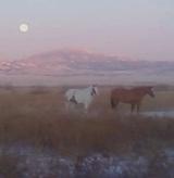 Triple Diamond Horses, 160 Ayers Rd, Wheatland, WY, 82201, USA